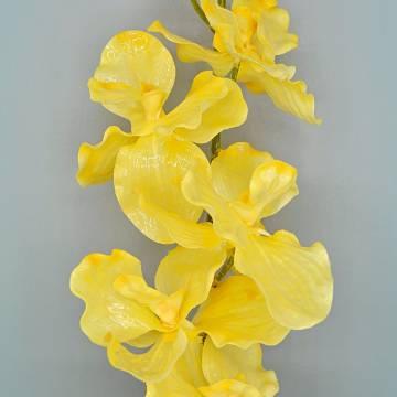 Orchidea 12